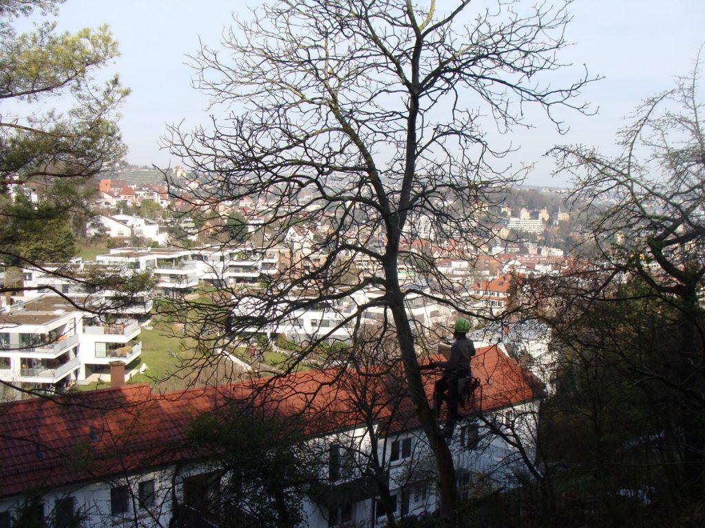 Baumfällung in Stuttgart