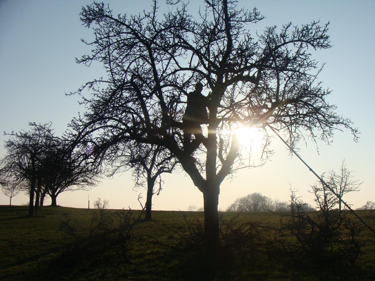 Obstbaumschnitt ist einfach schön